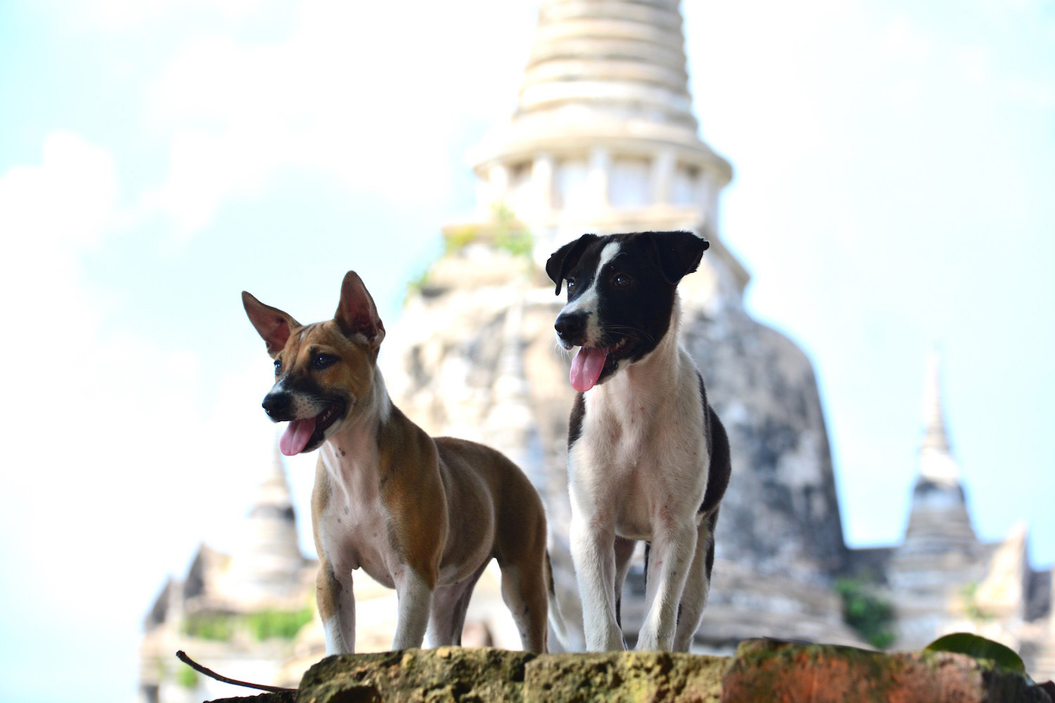 These Thailand Animals Rescues Will Melt Your Heart